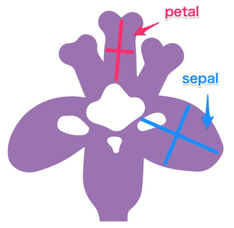 Python seaborn 使い方 irisについて